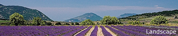 French Landscape Images